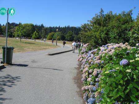 スタンレーパークの片隅に咲いていたあじさい(hydrangea)です。