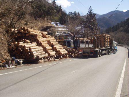 山林部伐採現場です。ヒヤブ社製クレーンを積んだトラックが、毎日伐採現場から製材工場様へお伺いしています。